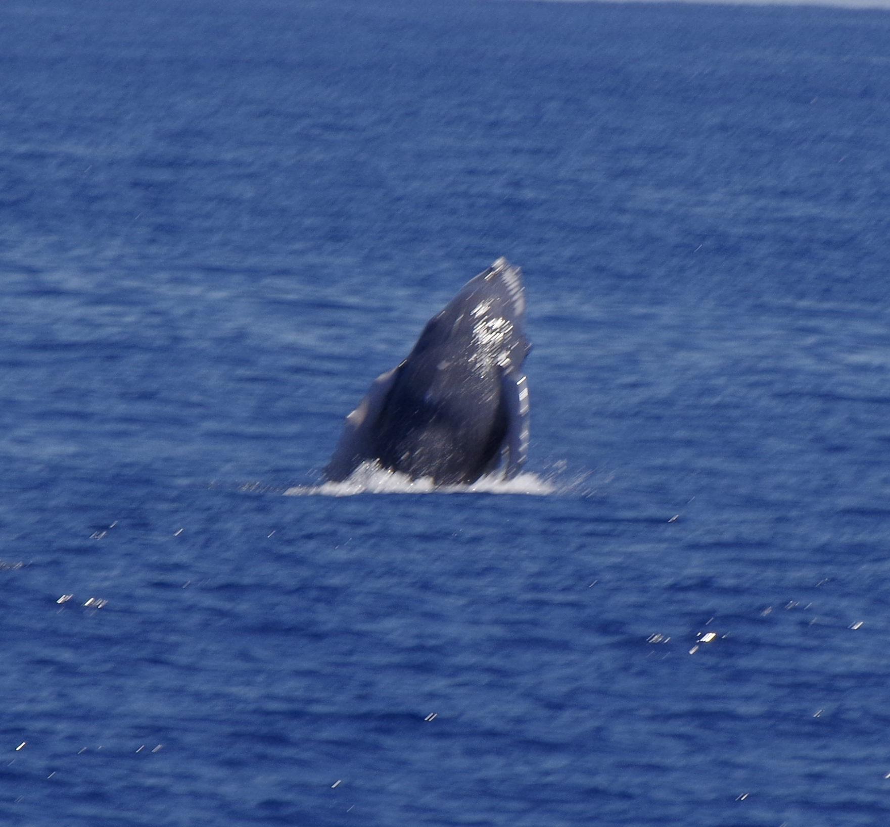 baleineau 3