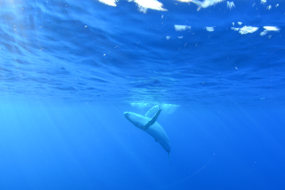 baleineau-copie